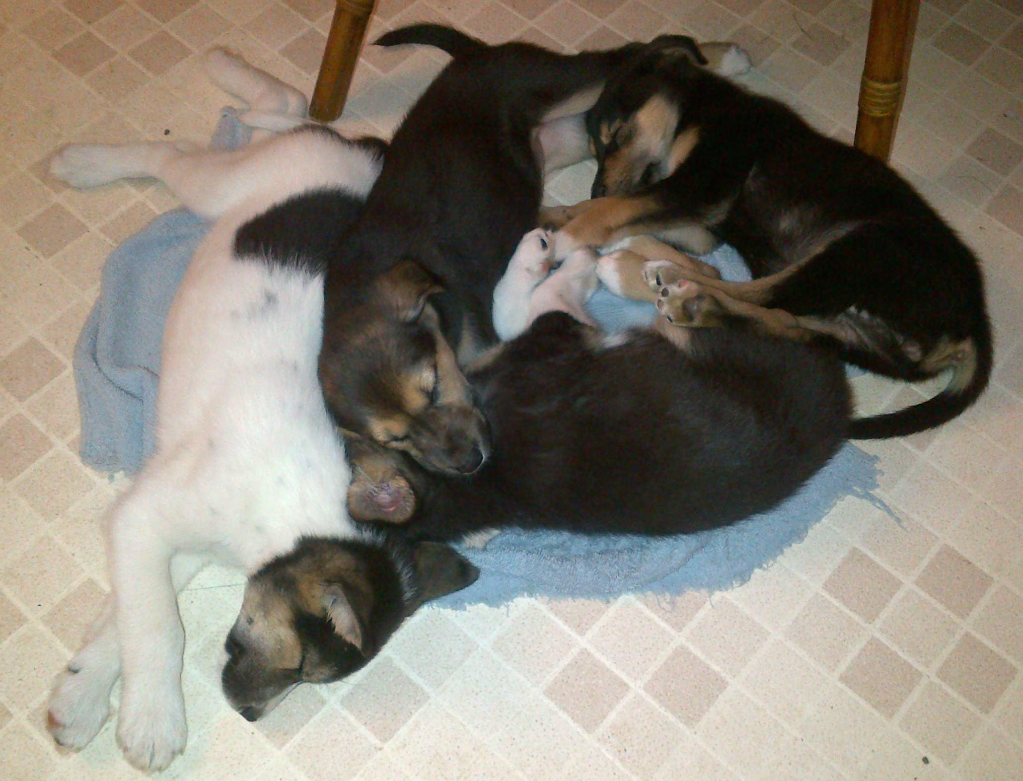 sleepingpups