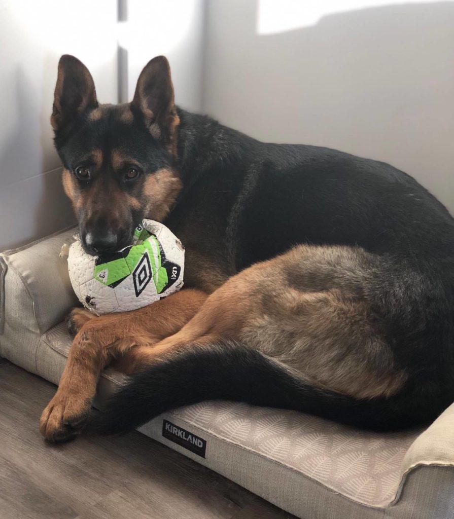 Rocky soccer ball 2