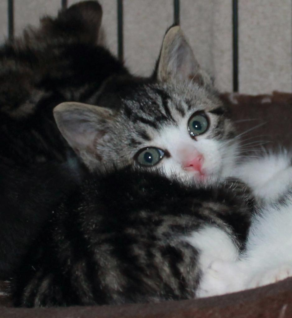 Sweet Sweet Kittens Have Been Adopted Cross Our Paws