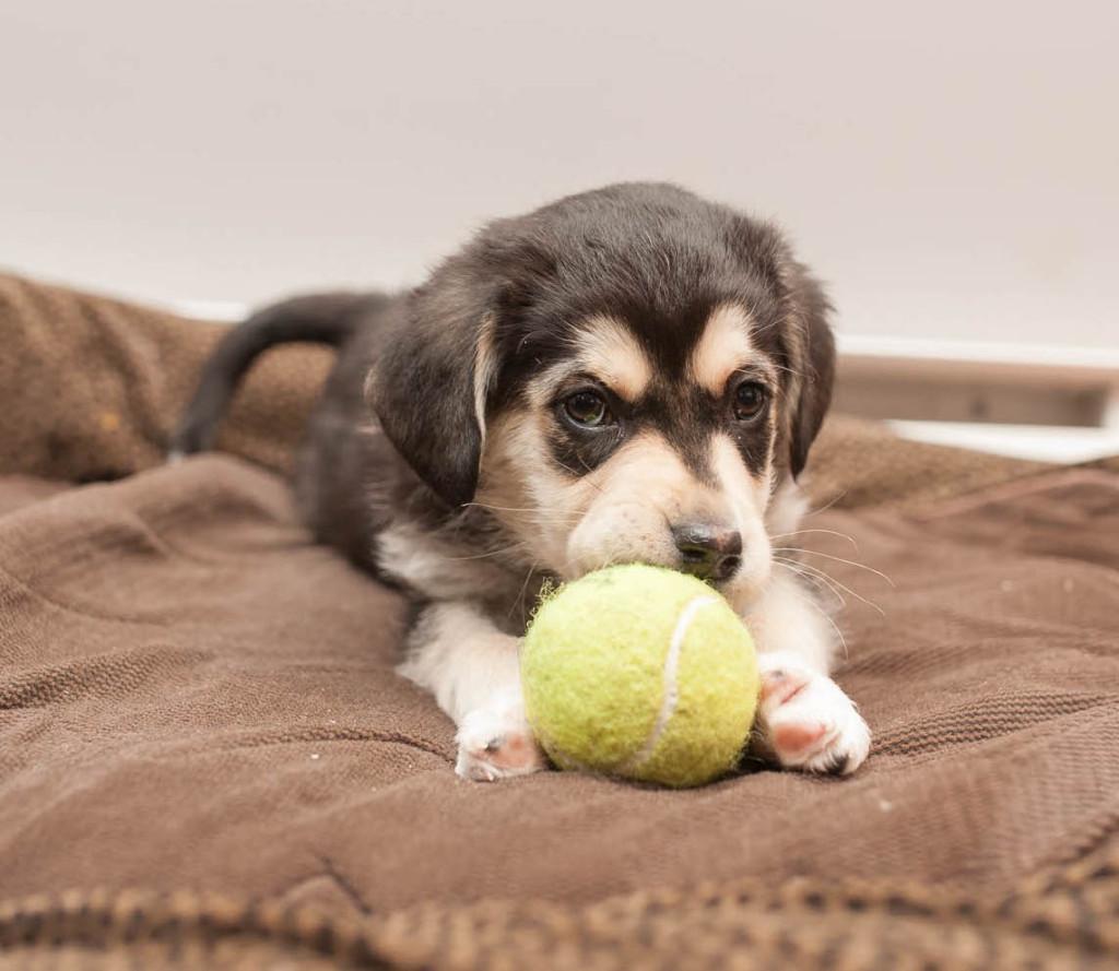 Puppy-6